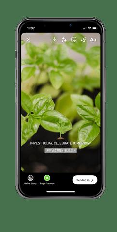 Basilikum Pflanzen und investieren
